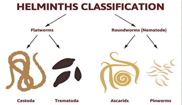 Pinworms másik név, Karcolás egy gyermekkel - átadta az analízist a férgek számára - neg