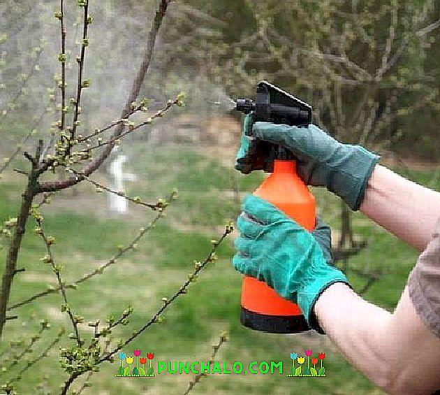 hogyan lehet egy fát permetezni a parazitákból)