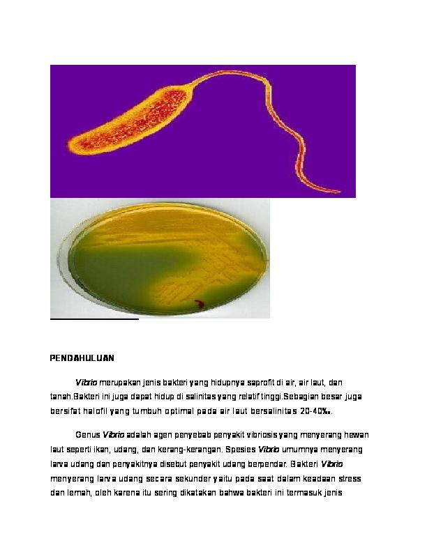 saprotrofák paraziták Vibrio cholerae