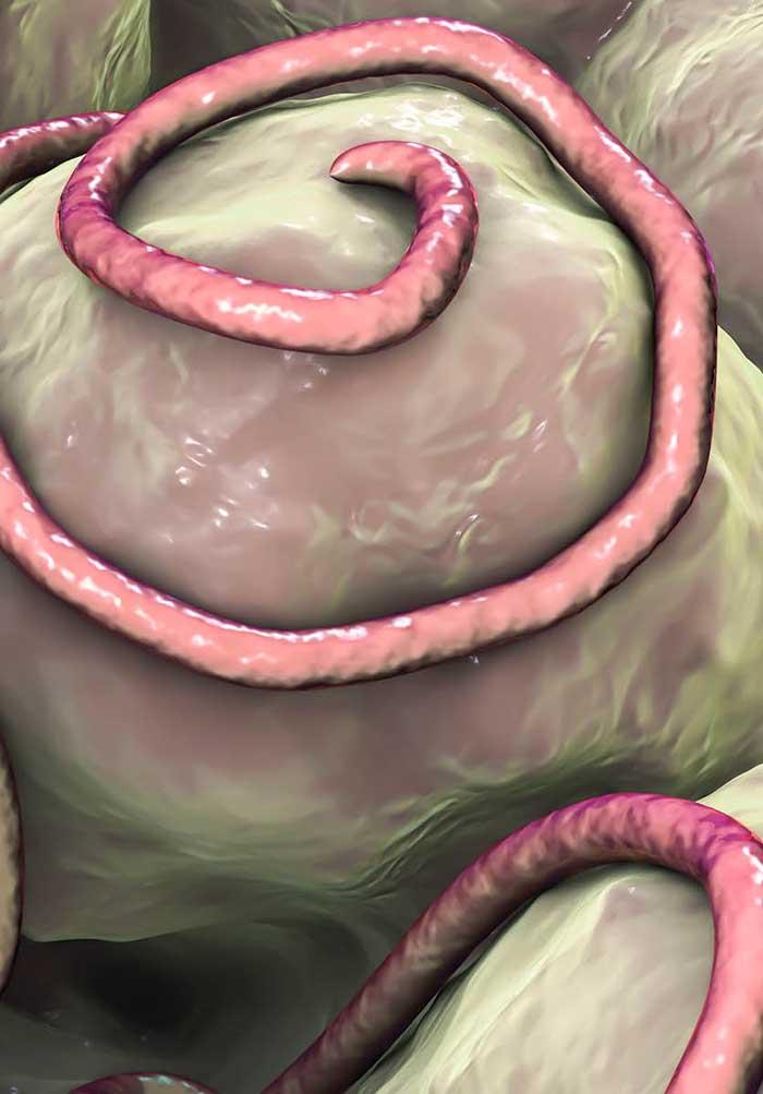 a világon a leggyakoribb helminthiasis az keserű parazitákkal történő kezelés