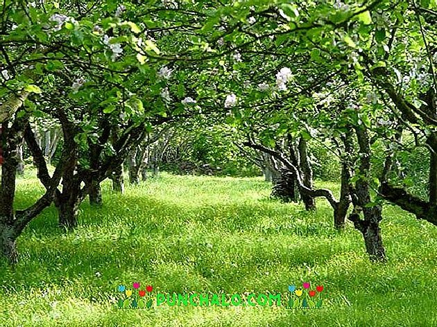 Cseresznye - és meggyfák korai pusztulása - Agro Napló - A mezőgazdasági hírportál