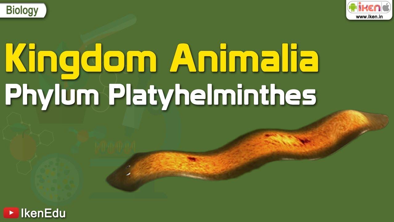 Parazita típusú coelenterates, Phylum platyhelminthes class trematoda