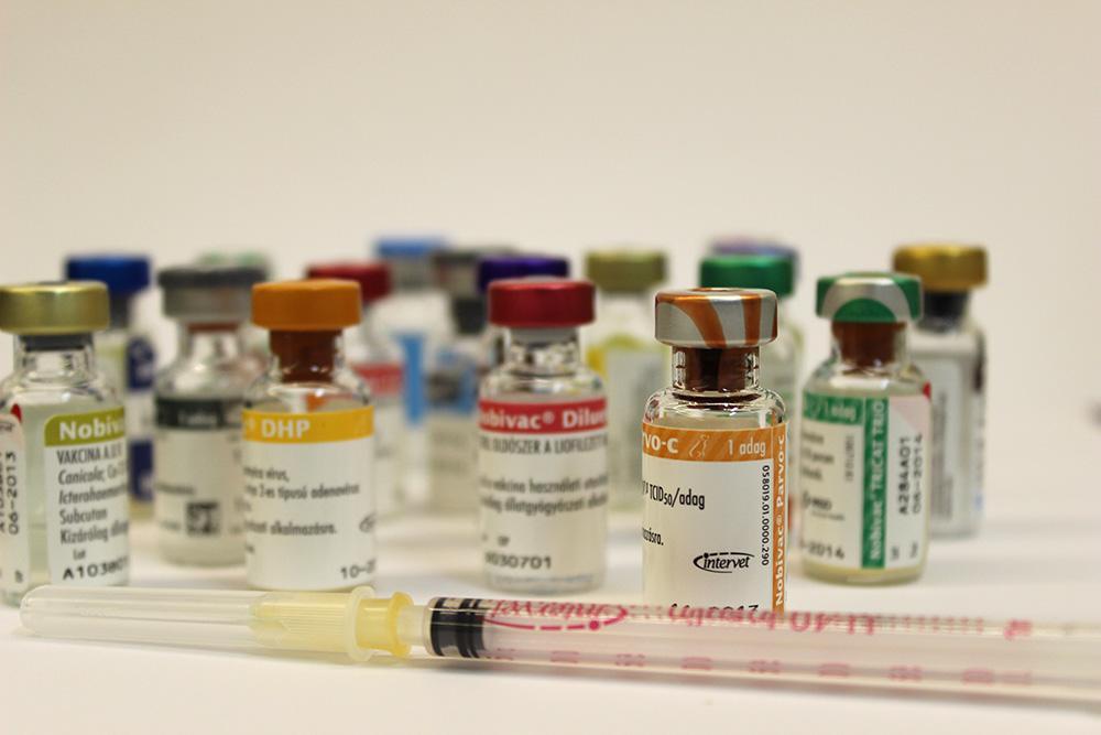 giardiasis elleni oltások)