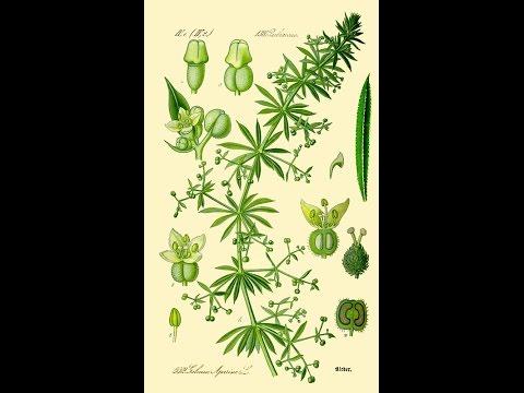 parazitákból származó gyógynövények neve