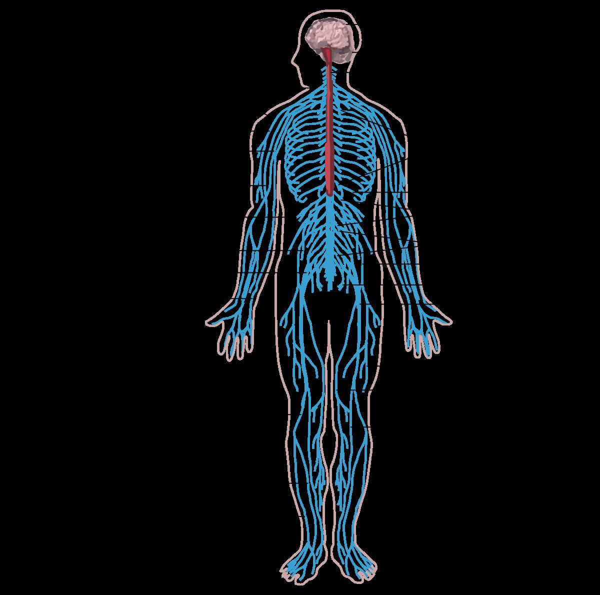 Paraziták érzése az emberi test kezelésében, A leggyakoribb élősködők a testünkben - HáziPatika