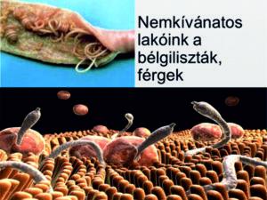 paraziták egy emberi sebben