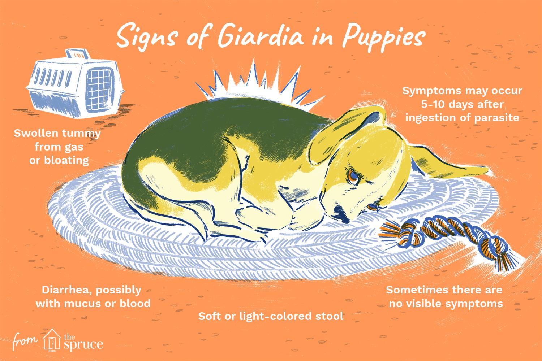 a giardiasis válaszok meggyógyultak a paraziták zavarják az éjszakai alvást