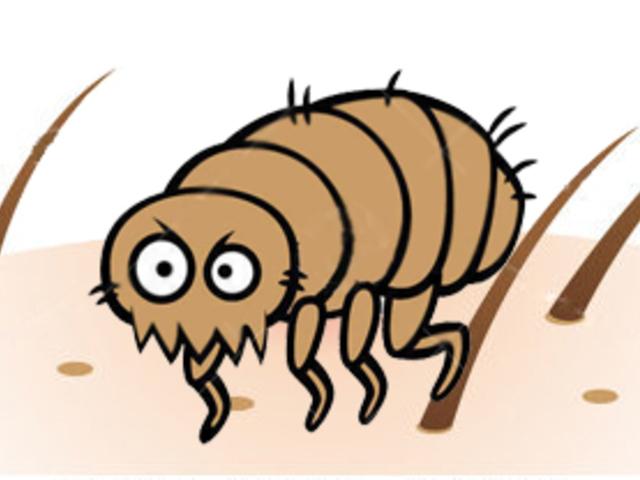 a paraziták fehérjékkel táplálkoznak)