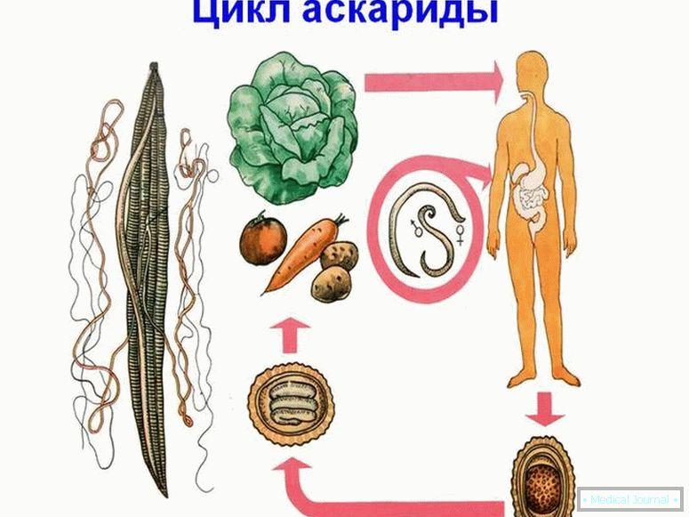 körömféreg- tojás kezelése pinworms felnőttek tünetei és kezelése