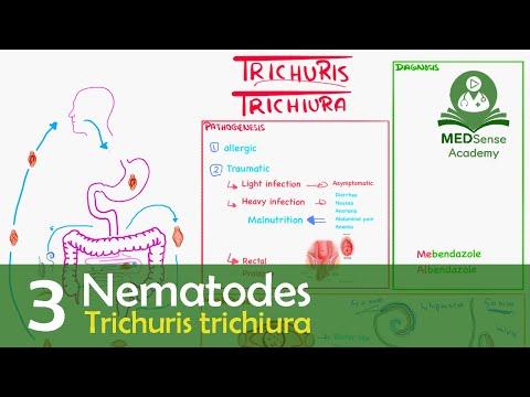 mit esznek a pinwormok az emberi testben)