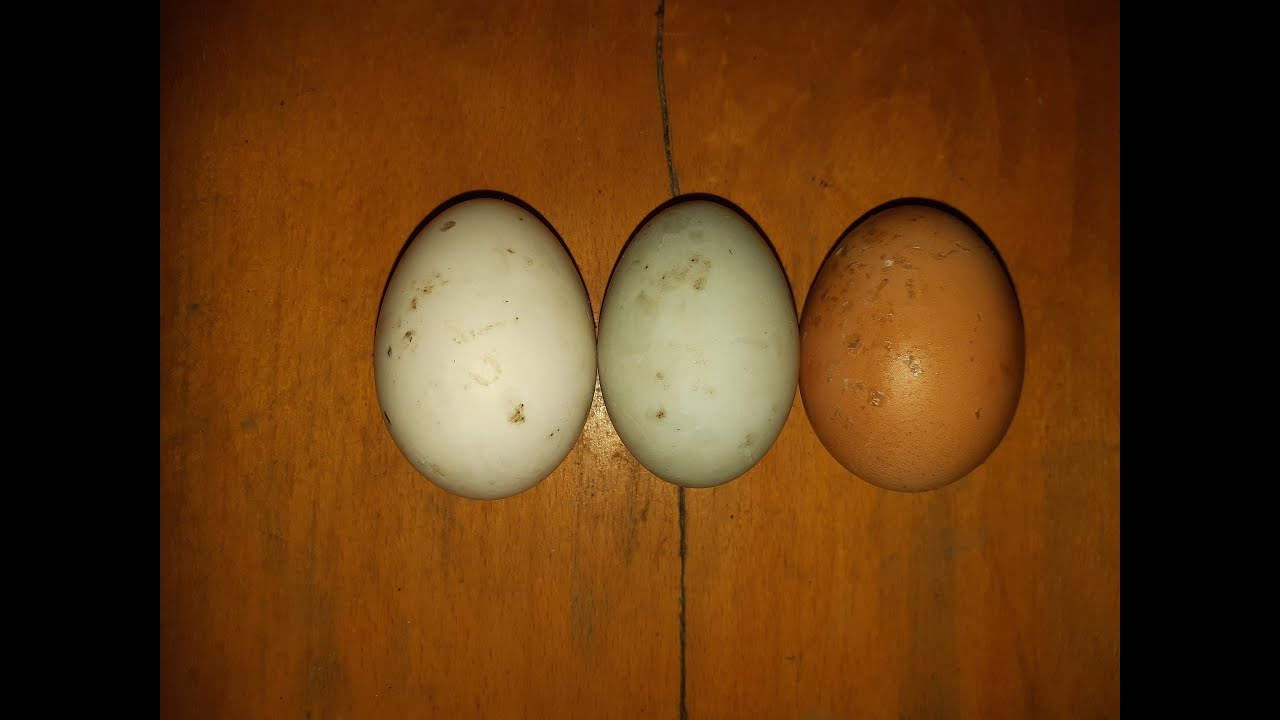 körömféreg- tojás a széklet kezelésében