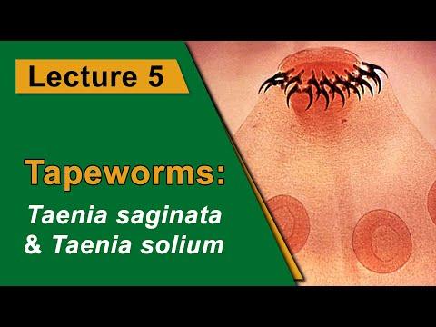 parazita kezelõ gyógyszer pinwormok, akiknek véleménye volt