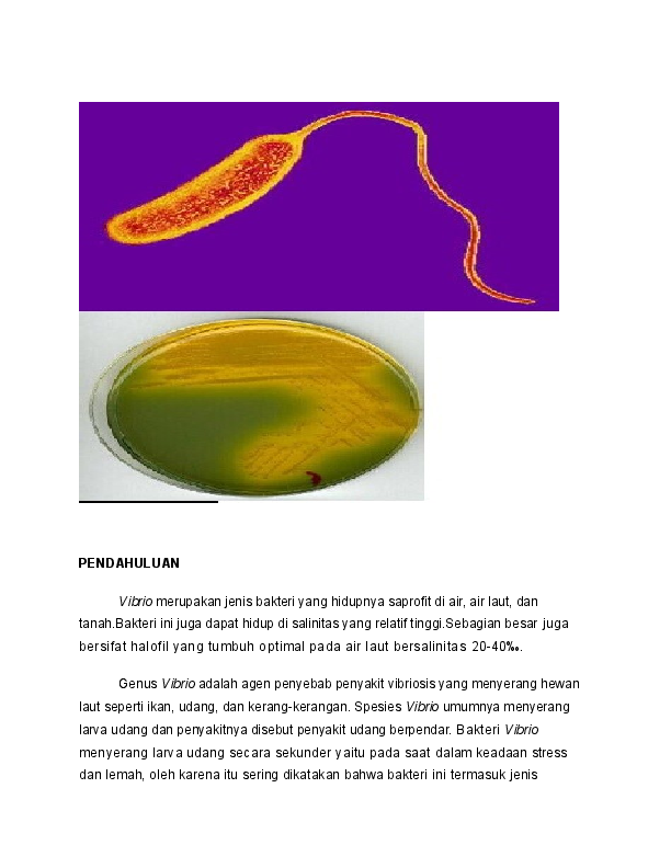Tetanus bacillus parazita vagy szaprofita