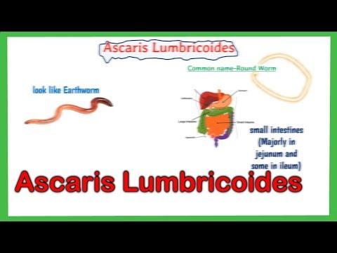 felnőttkori ascaris elleni gyógyszeres kezelés