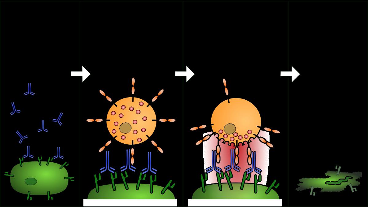 Allergiát okozó férgek. Férgek fényes karrier előtt