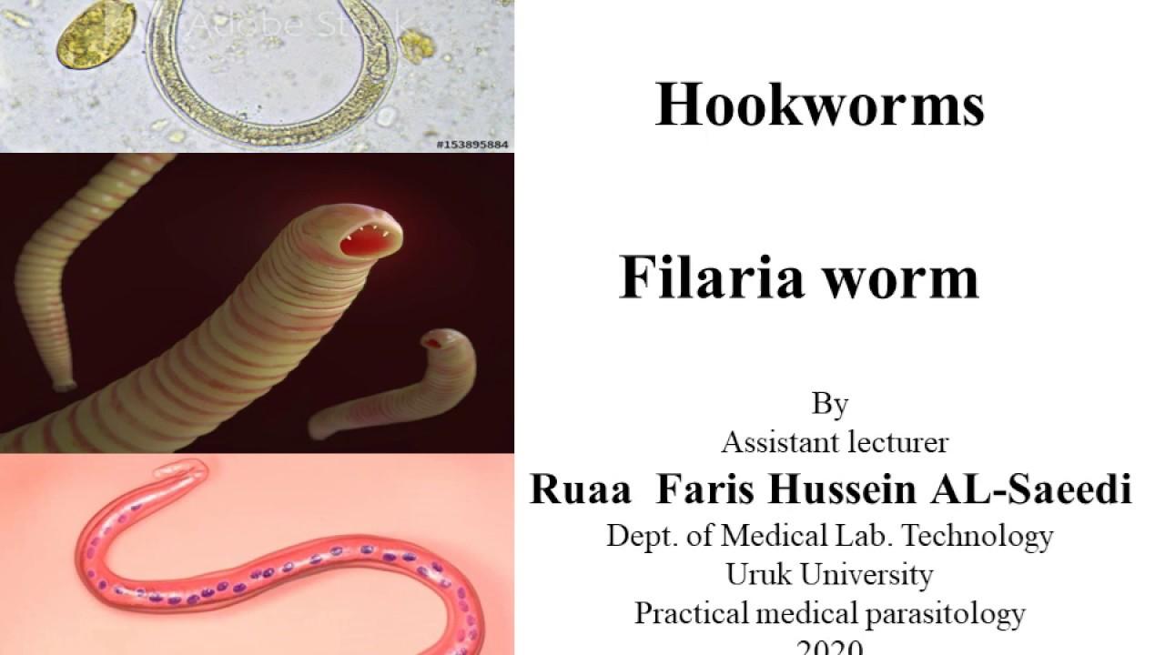 pinworm peték, milyen hőmérsékleten pusztulnak el