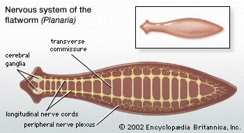 féregparaziták példái