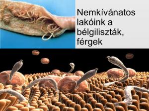 parazita szérum