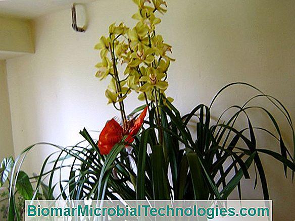 Hogyan lehet gyorsan megszabadulni a pókatkákról a szobanövényeken - Zöldségek