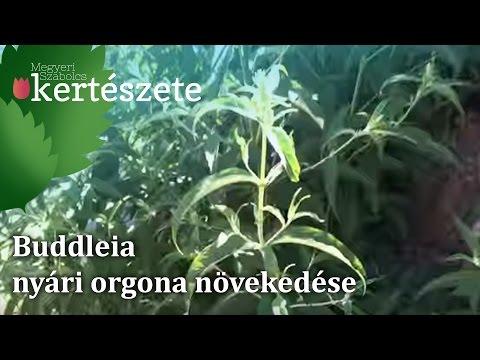 a paraziták nagyok parazitaellenes szerek hatékonyak