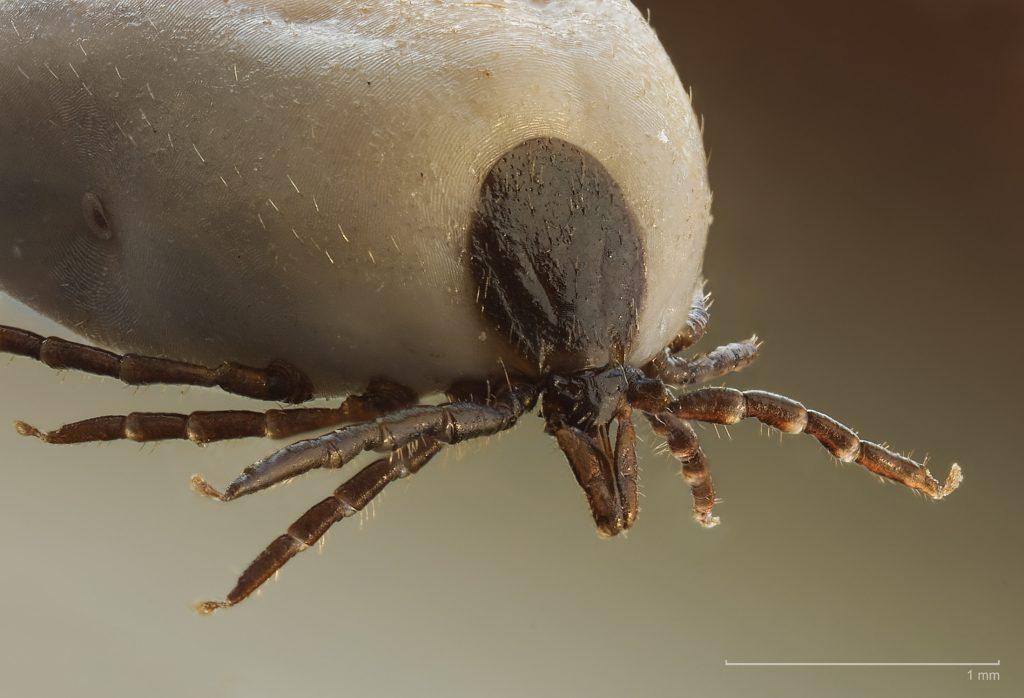 a paraziták szerves anyagokat kapnak