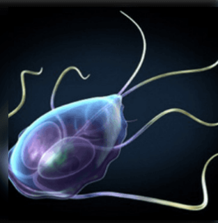 Paraziták a szervezetünkben: mikor gyanakodjunk? - HáziPatika Az emberi testben elo parazitak