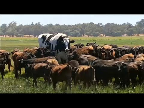 Mi a szarvasmarha galandférgének rendszere