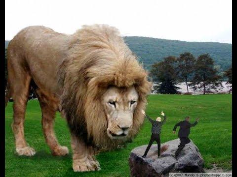 Tudja-e, melyik az élővilág leghosszabb állata?