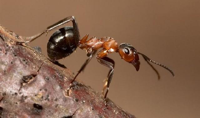 melyik parazita a legveszélyesebb az emberre hány kg parazita az emberben