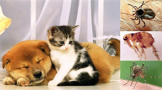 Külső és belső paraziták elleni védekezés (kutya) | MóraMancs