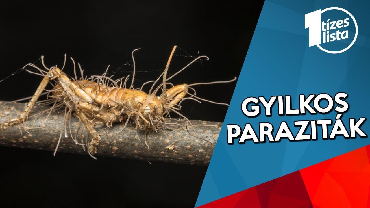 parazita megelőzési módszerek)