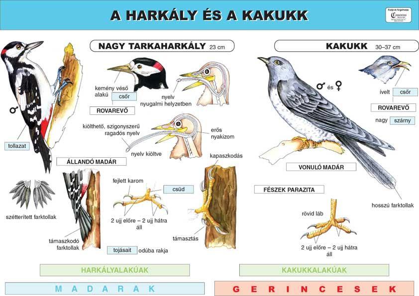 harkály paraziták