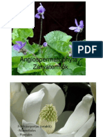 paraziták az abutilonon)