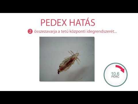 Gyógyszer gyógyszer a paraziták számára - opisthorchiasis hatása a hajra
