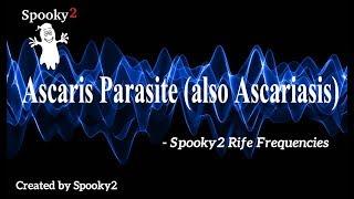 az ascariasis átvitele