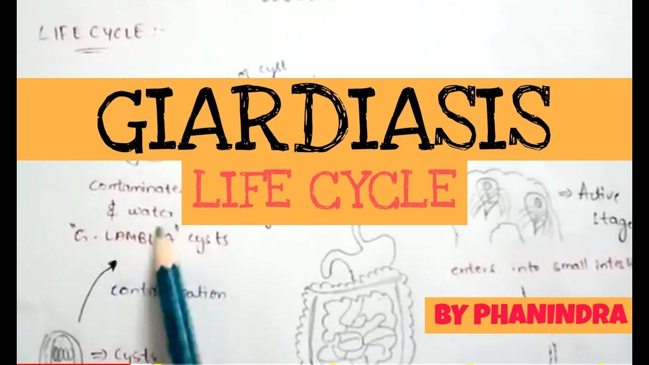 Hogyan nyilvánul meg a giardiasis az emberekben?.