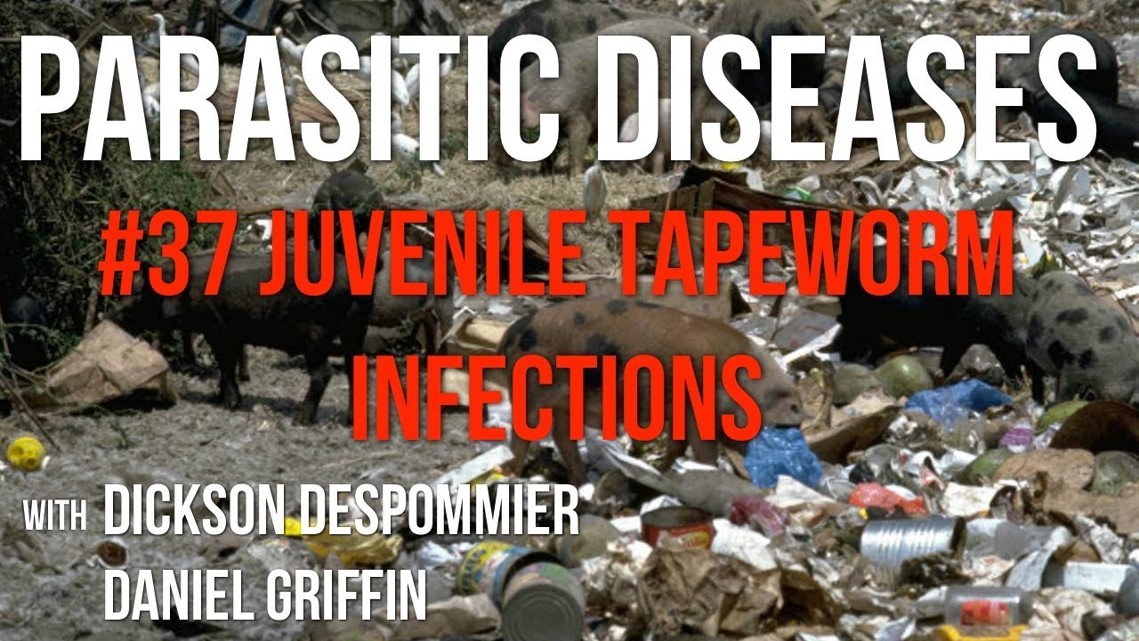 cysticercosis paraziták jó féreghajtó szer