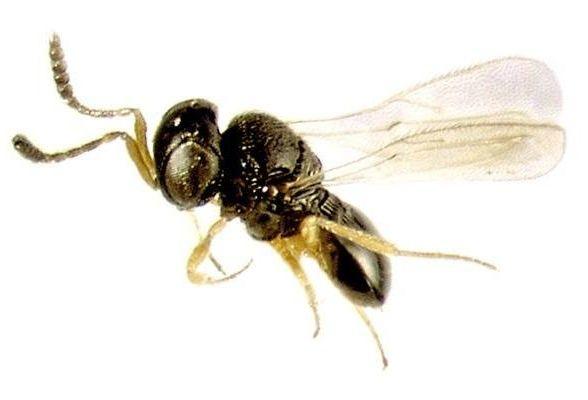 paraziták károsodása szakma parazita elvtelen