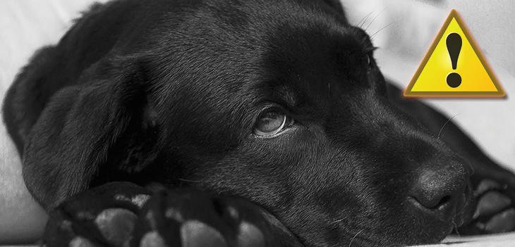 a kutya szaga az ember szájából