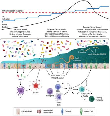 Mi a helmint flotáció, A primer immunhiány jól kezelhető, ha időben felismerik | Mandiner
