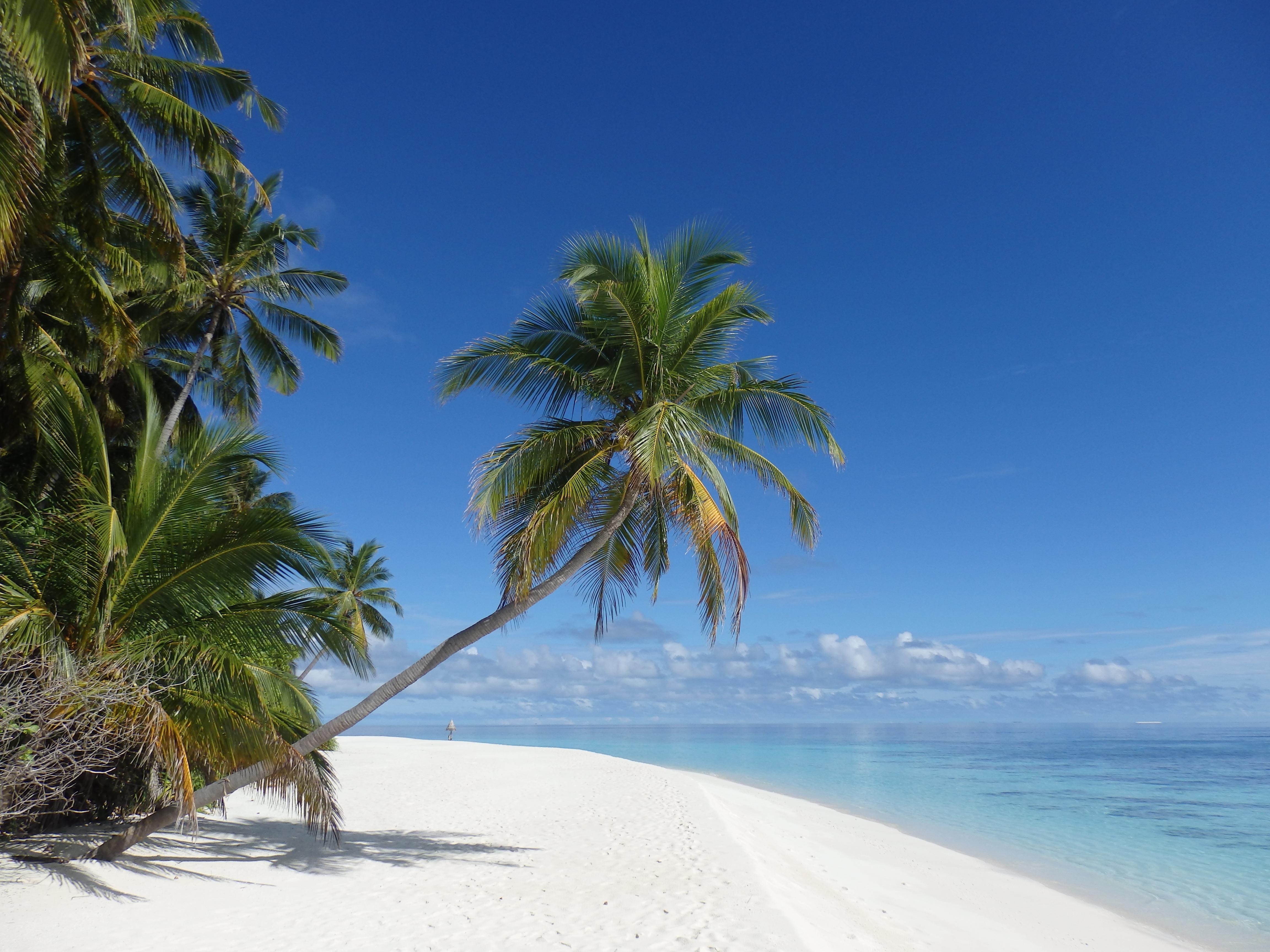 paraziták a maldív- szigeteken