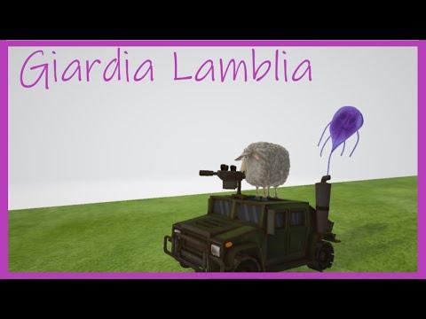 A lamblia parazitáinak kezelése. Giardia és kerekférgek tünetei és kezelése