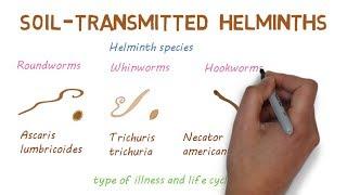 Helminthiasis hatékony kezelés Miert hivjak a balatont a magyar tengernek