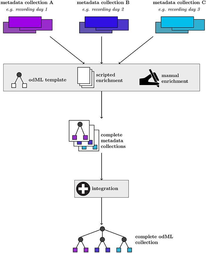 Tinidazol giardiasis kezelés