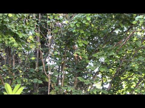 paraziták a dzsungelben