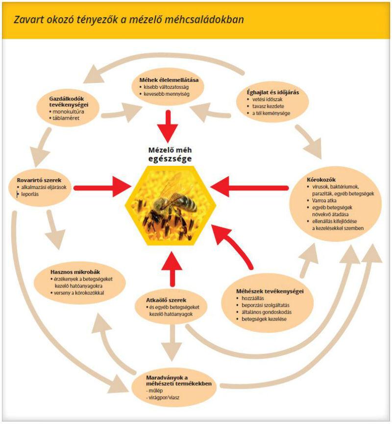 A férgek elleni megelőző intézkedések. Típusú körömférgek a körömférgek általános jellemzői és