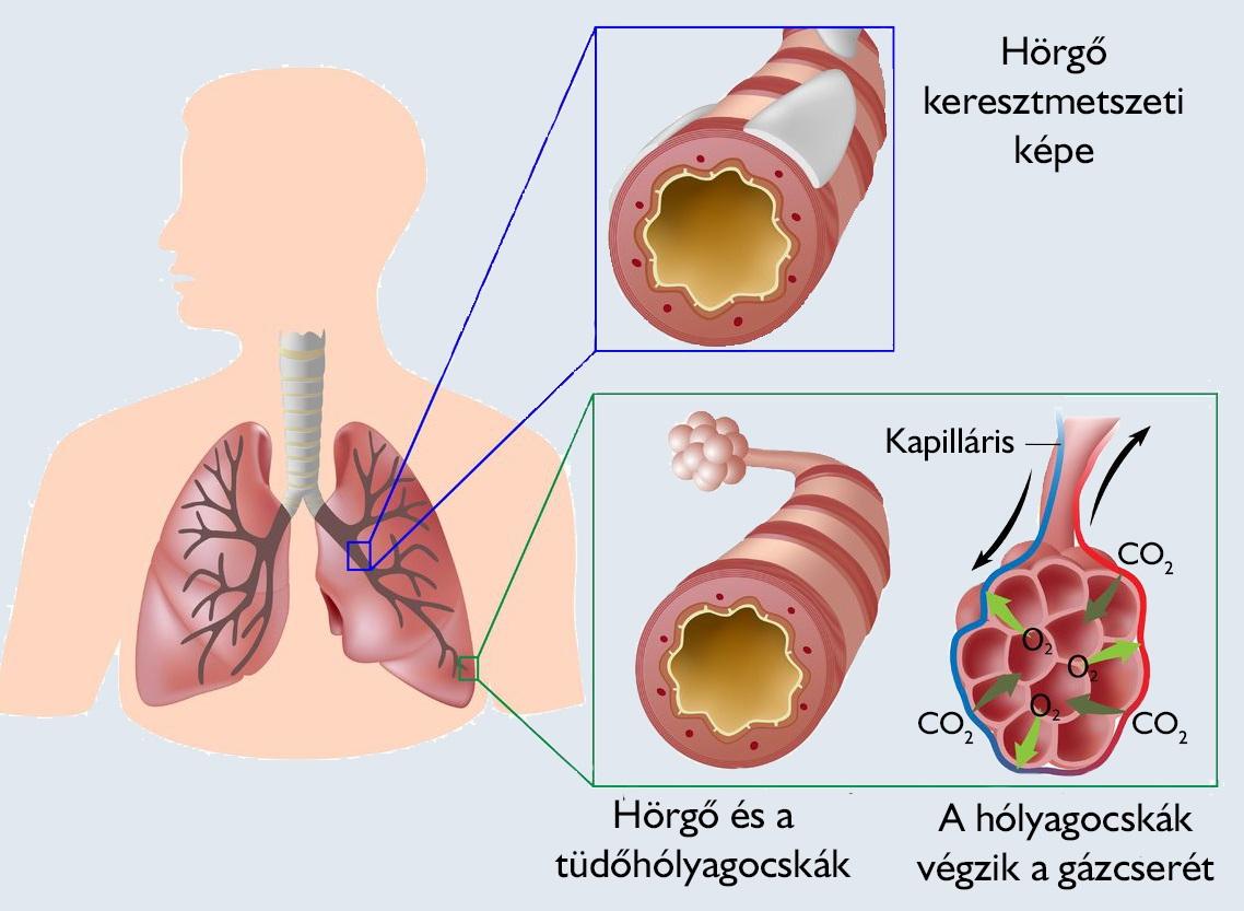 Pulmonológia (tüdőgyógyászati) szakrendelés, járóbeteg-ellátás