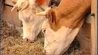 Mi a szarvasmarha galandférgének rendszere. Milyen bélférgek kerülhetnek szervezetünkbe?