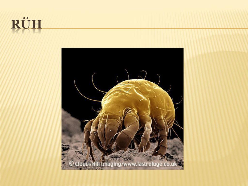 paraziták a hátsó bőr alatt