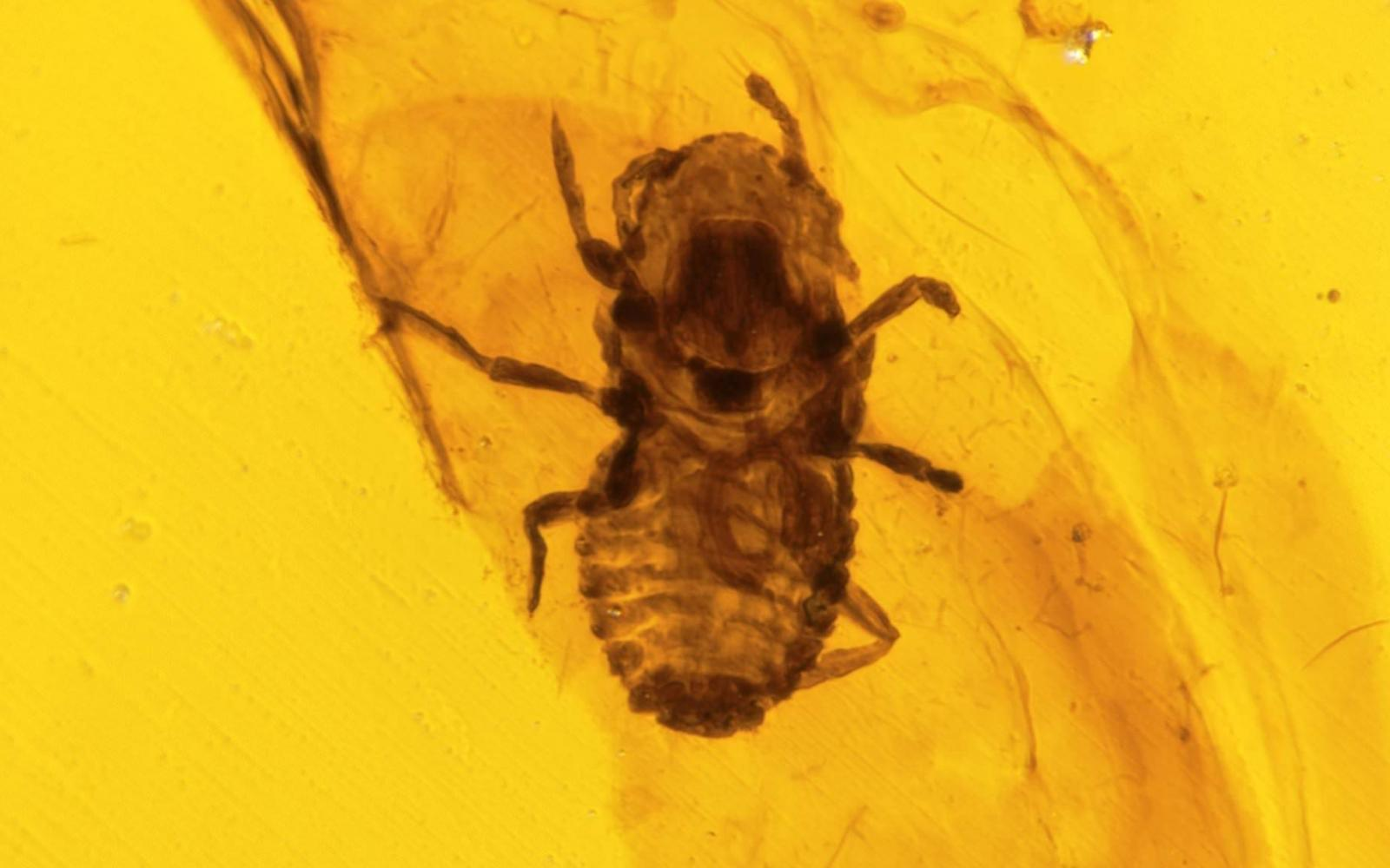 Élet és tudomány - Hangyákon élő gombák